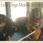 Mobile dog grooming North Hollywood