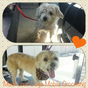 Dog grooming makeover