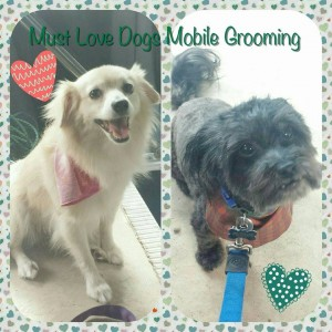 Dogs getting mobile grooming in North Hollywood